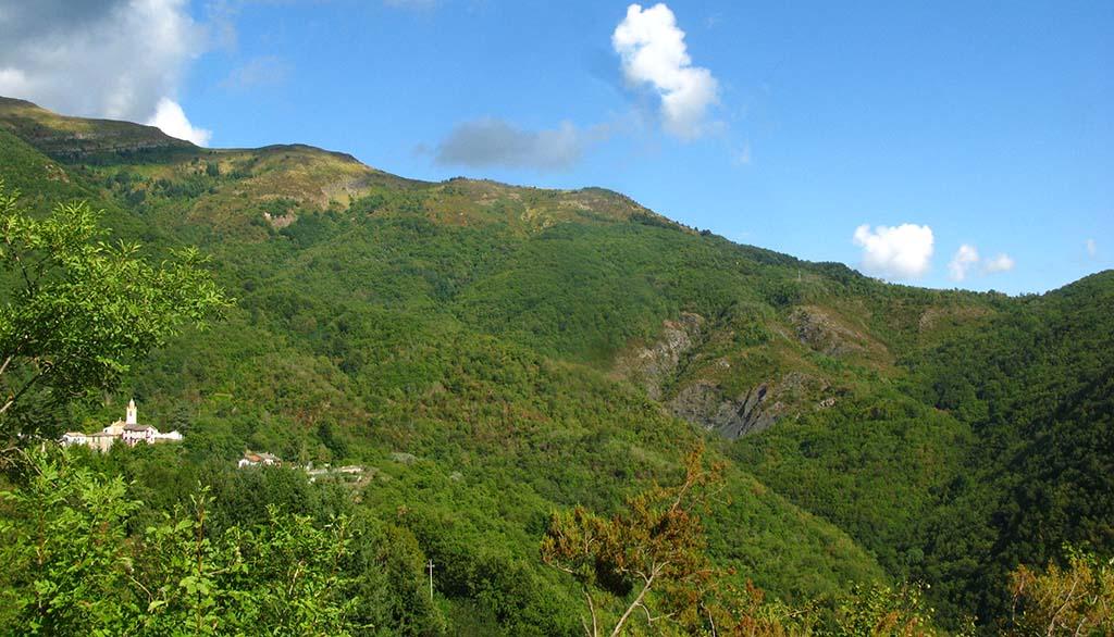 Semovigo forest
