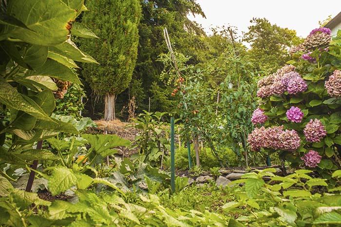 About Veggie garden